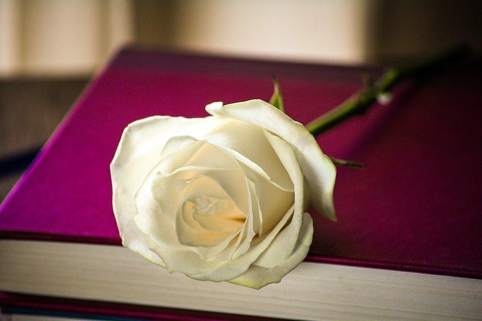 Rosa appoggiata su un libro: le parole fioriscono