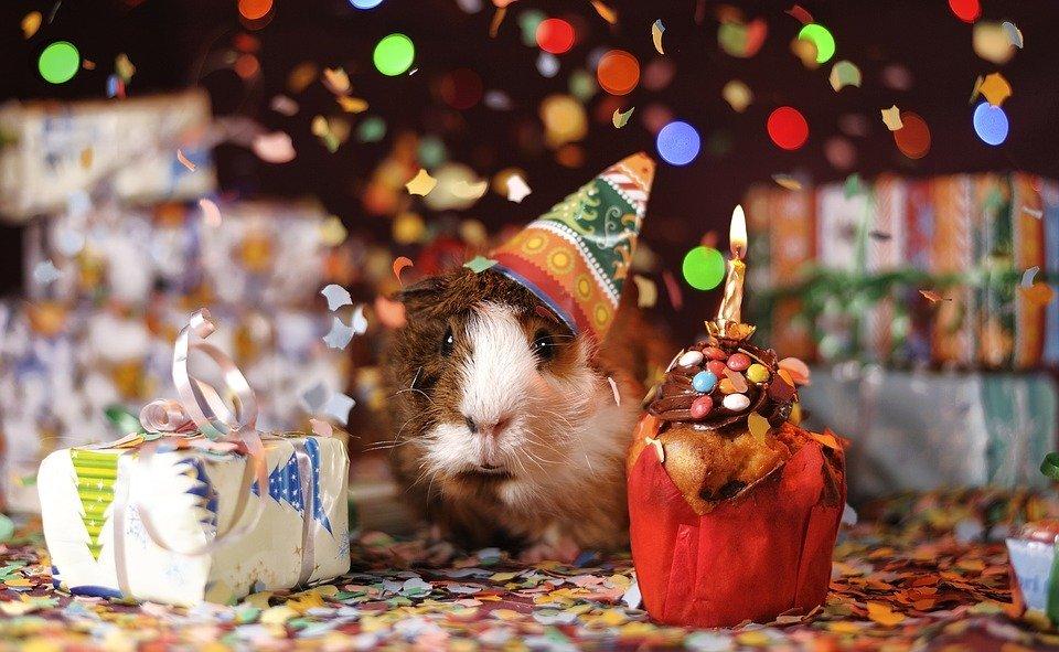 Buon compleanno al blog
