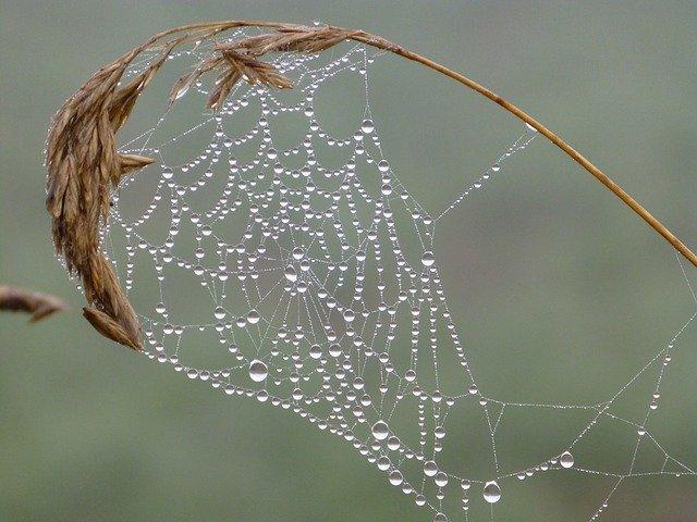 Il crawler è detto spider perché il suo funzionamento assomiglia al comportamento di un ragno con la sua ragnatela